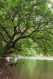 CreekSide. Nature in rural Georgia stock photos