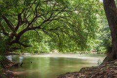 CreekSide. Nature in rural Georgia stock image