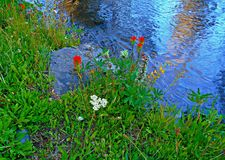 Creekside Posies. Wildflowers next to Pole Creek - near Sisters, OR stock photos