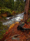 Creekside Sentinel. Autumn scene along Whychus Creek - near Sisters, OR royalty free stock photography