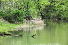 Creekside in the spring in Ontario, Canada. Spring greenery along Millers Creek royalty free stock photos