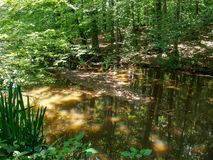 Free Creekside Trail To Starmount Farms Lake In Greensboro Stock Images - 150716394