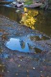 creeksidereflexion Arkivbild