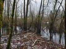 Creeky beauty royalty free stock photos