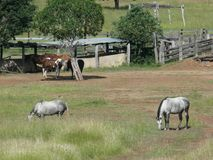 Creel and gate with horses Royalty Free Stock Images
