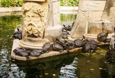 Creep of Tortoises Royalty Free Stock Photo