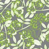 Creeper berries seamless pattern Stock Image