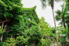 Creeper-covered Chinese traditional house in summer afternoon Royalty Free Stock Image