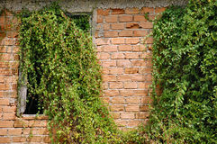 Creeper plant Royalty Free Stock Photo