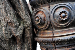 Creeper plant and rusty pole Royalty Free Stock Images