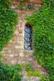 Clambering plant on the stone wall with a window. Creeper plant on the stone wall where the glazed window in which the reflection of the sky Royalty Free Stock Photo