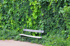 Creeper plant and wooden bench Stock Photo