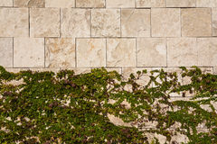 Creeper on a Stone Wall. Abstract background of ivy on a square stone wall Royalty Free Stock Photography