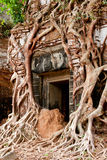 Creeper vine temple. Banyon roots grow up a temple near the Angkor Wat complex in Cambodia Stock Image