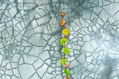 The Creeper On Wall. The Green Creeper On Cement Wall, North Of Thailand Stock Photography