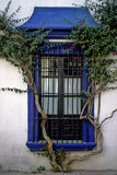 Creeper and window. Lovely window and creeper in the village of Tequisquiapan stock images