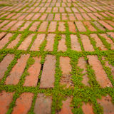 Creepers Growing Around the Edges of Brick Pavers. Green creepers sprouting and growing between the cracks around individual brick pavers Royalty Free Stock Photography