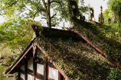 Creepers and weeds on roof of ancient building in sunny winter Stock Image