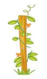 A creeping or climbing plant Stock Photo