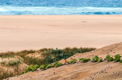 Creeping Green Dune Vegetation on Sand Patterns Stock Photos