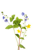 Creeping jenny and speedwell Royalty Free Stock Image