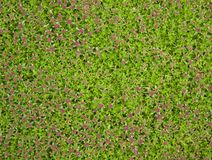 Creeping Moss Stock Photo