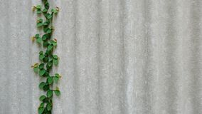 Creeping plant background Stock Images