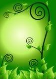 Creeping plant. Flora and sun, vector, Illustrator Stock Photography