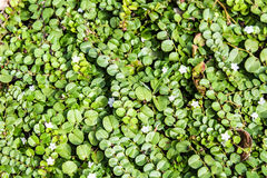 Creeping plant Stock Photo