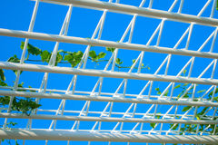 Creeping plant on the roof with sky. Image Stock Photography