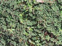 Creeping plants Royalty Free Stock Photography