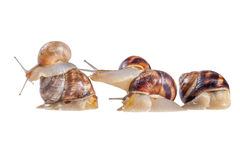 Creeping snails Stock Photos