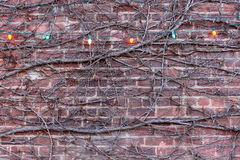 Creeping vines and colorful lights Stock Image