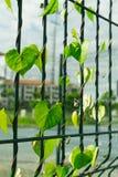 Creeping weeds on fence of stadium Royalty Free Stock Photos