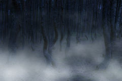 Creepy atmosphere. Ominous forest - twisted trees and fog royalty free stock photo