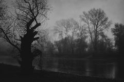 Creepy autumn landscape showing old tree on river shore at dawn Stock Photos
