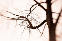 Creepy Barren Tree. With a blur effect Stock Photo