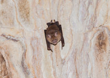 A creepy bat in a cave