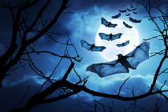 Creepy Bats Fly In For Halloween Night By A Full Moon. These creepy bats fly in on Halloween Night with a full moon behind them Stock Photo