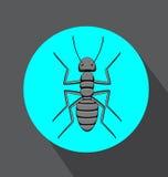 Creepy Black Ant Stock Image