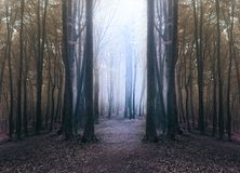 Free Creepy Blue Light In Foggy Forest With Circle Of Dark Trees Royalty Free Stock Photography - 112001887