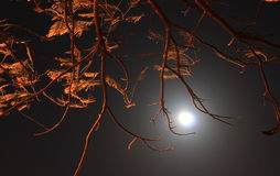 Creepy branches over the moon Stock Images