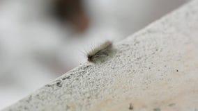 Creepy caterpillar stock video