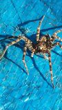 Creepy crawler. Spider on a tarp Stock Photography