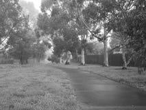 Creepy dark bike path with tree line and heavy fog Royalty Free Stock Image