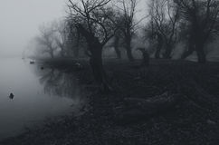 Creepy dark forest beside river shore on misty autumn day Royalty Free Stock Photography