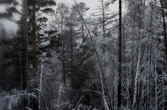 Creepy, dark forest Stock Images