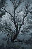 Creepy dark landscape with tree and the moon Stock Photo