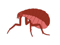 Creepy Floh Insect Vector. Illustration Stock Photography