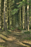 Creepy forest. A dark path in a creepy forest Stock Image